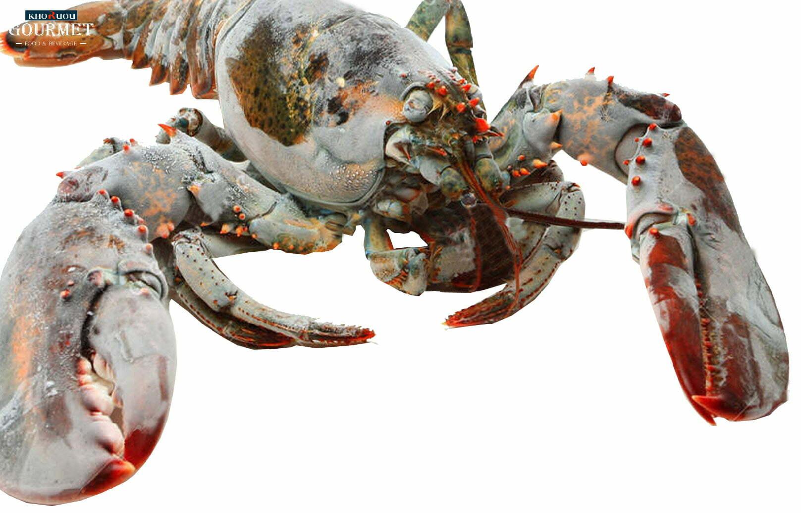Tôm hùm Canada đông lạnh - món hải sản giàu dinh dưỡng